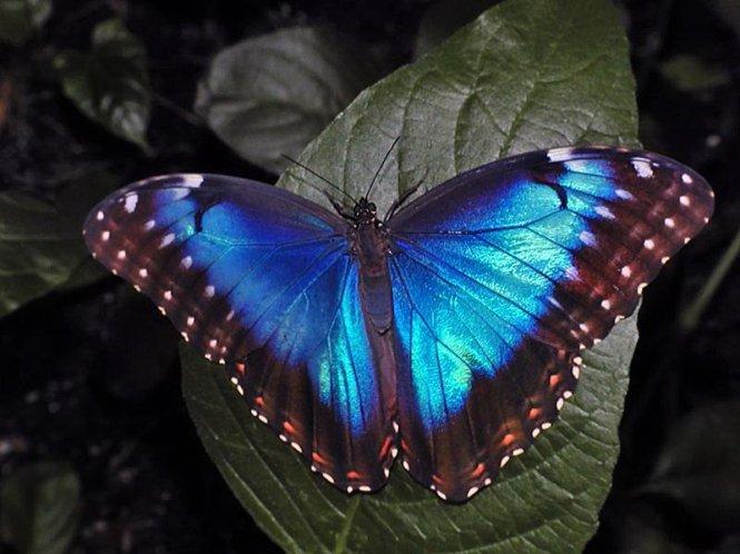 блестящие картинки бабочки.